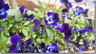 4,27紫