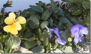 3,28花壇
