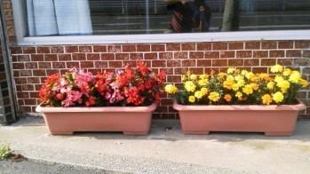 センター前花壇.JPG